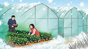 겨울에도 채소를 키울 수 있는 비닐하우스