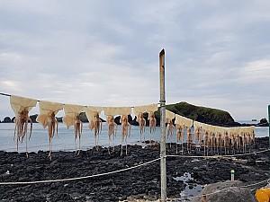 일제강점기 울릉도의 특산품이 된 오징어