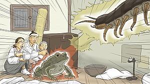 지네를 물리쳐 처녀에 은혜 갚은 두꺼비