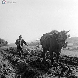 소가 없어도 농사는 지어야지, 소짝