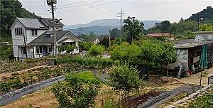 용진산을 품은 사호마을