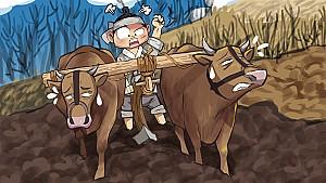 두 마리 소를 묻은 골짜기, 밀양 우곡