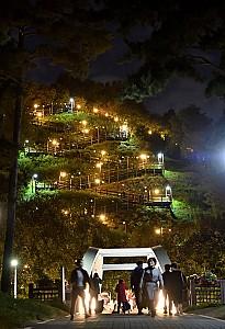 6만평 하늘공원에서 펼쳐지는 서울억새축제