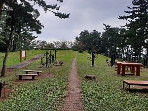 민둥산에서 친근한 숲길로 변한 제주시 오라 민오름